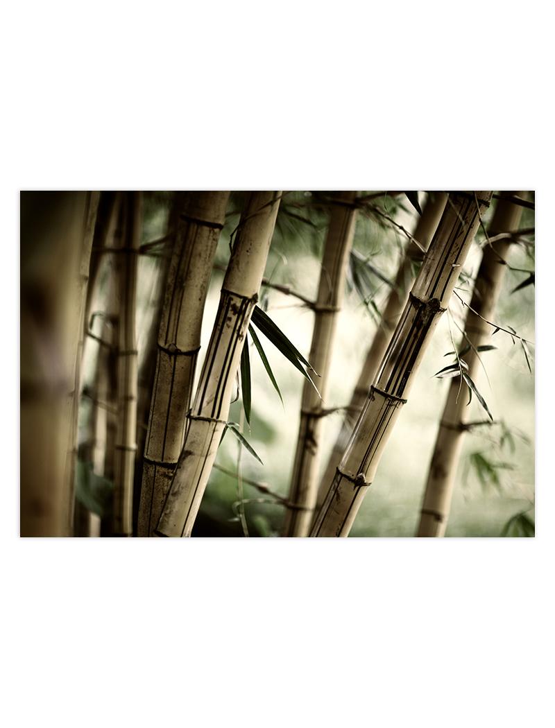 bambusovy les