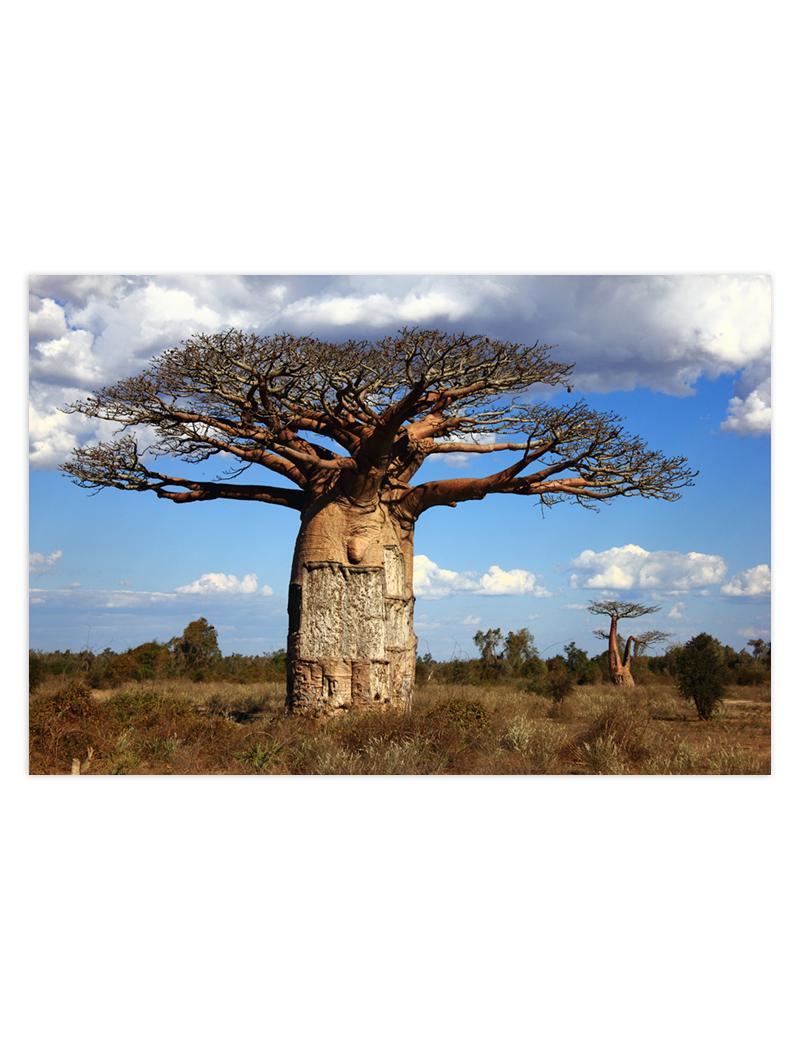 baobaby
