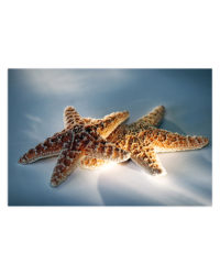 hviezdice