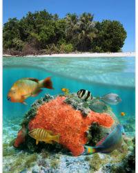 koralovy ostrov