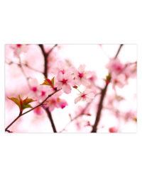 kvety stromu