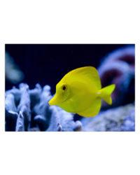 morska ryba