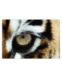 tiger oko